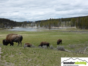 Reisebericht - USA – Wyoming / Montana – Yellowstone NP